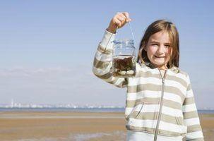 Como transformar algas em combustível para um projeto de ciências