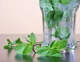 Como usar plantas de hortelã