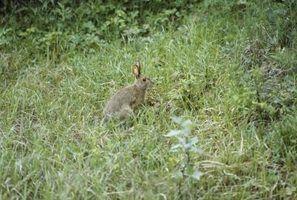 Como desmamar coelhos