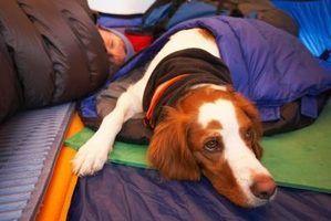 Idéias para cão camas