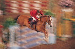 Idéias para saltos de cavalos da pintura