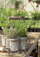ervas planta dentro plantadores para uma exibição aromático.