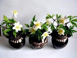 Idéias sobre o que colocar em vasos de flores