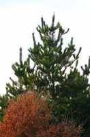 Leis de poda de árvores illinois
