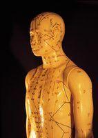 As partes importantes do corpo humano