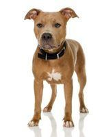 Em que partes de maryland é ilegal possuir um pitbull?