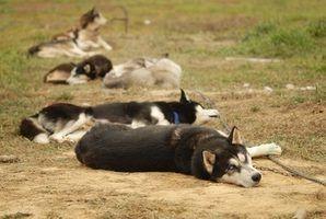 Leis de contenção de cão de estimação indiana