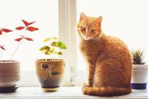 Casa de plantas de interior que são perigosas para os gatos para comer