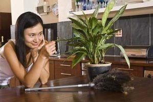 Plantas de interior que reduzem a pó