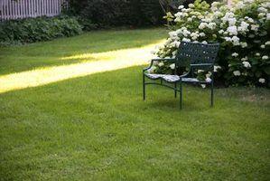 produtos Weed-n-Feed combinar fertilizantes e herbicidas.