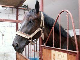 Regras e regulamentos do irs para as empresas cavalo relacionado