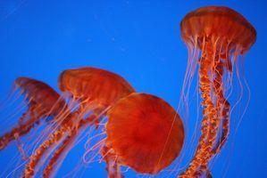 Projetos de arte medusa