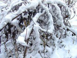 John deere 49 especificações snowblower