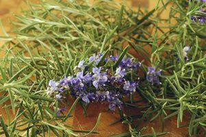 Plantas paisagismo para sul texas