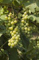 Lista de vinhos da borgonha