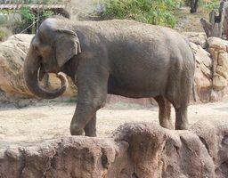 Lista de animais ameaçados de extinção em kerala