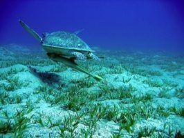 Lista de animais marinhos em perigo