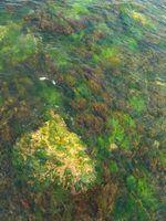 Tipos de plantas e animais aquáticos no rio mississippi