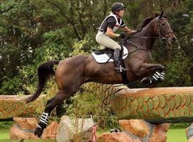 Lista de raças de cavalos olímpicos