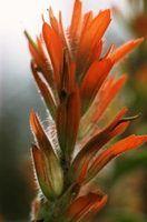 Lista de flores vulcânicas
