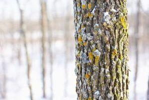 Ferramentas de remoção de casca de árvore