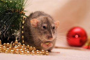Efeitos a longo prazo de veneno de rato