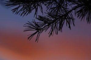 Plantas perenes de baixa luminosidade
