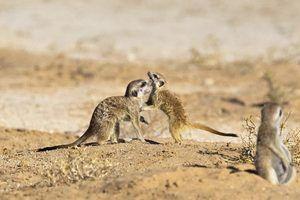Comportamento mongoose