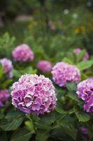 Nomes de plantas com flores ao ar livre