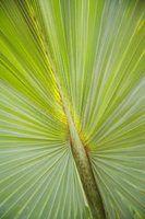 Nomes de plantas que crescem em miami