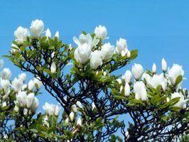 Nomes de árvores floridas do sul