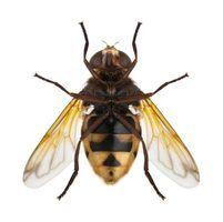 Natural maneiras de se livrar de insetos