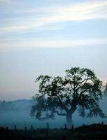 Neopets perguntas árvores cérebro