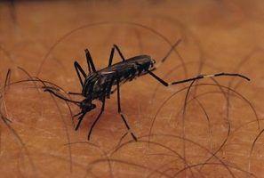 Nove dicas úteis sobre como identificar bugs & insetos mordidas
