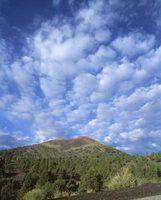 As plantas nativas em flagstaff, arizona