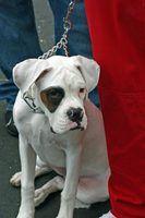Regulamentos ohio em canis
