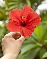 Orlando, florida, plantas nativas