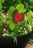 Outdoor ideias vaso de plantas