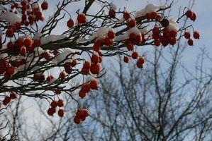 Atividades de inverno ao ar livre para pré-escolares