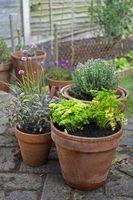 Plantas para uma cama do jardim rasa