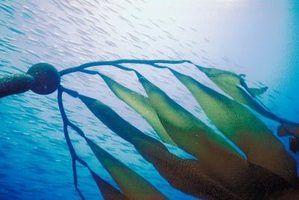 Plantas que vivem no fundo do mar