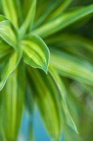 Plantas com folhas variadas verdes e amarelas