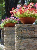Vasos de plantas para flores da primavera