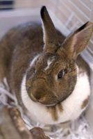 Problemas de peles de coelho