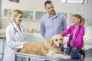 Retomar objetivos para um técnico veterinário