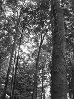 Riscos de contratação de um escalador de árvore sem seguro