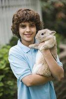 Houseplants seguros para coelhos domésticos