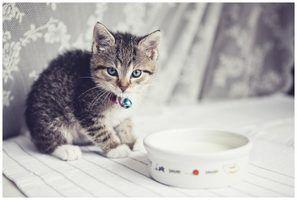 Sinais de um gatinho ter hipoglicemia