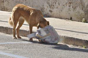 Sinais de que um cão está morrendo de diarréia