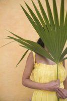 Pequenas palmeiras com espinhos